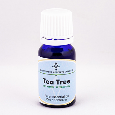 Tea tree essential oil acts as a immuno-stimulant and increases the body's ability to fight off any infections and is used to revive the mind and body.